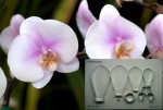 Набор каттеров Орхидея, большой st-56